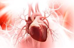 Metabolically Healthy Obesity Still Carries Increased Risk of Heart Failure, Arrhythmia
