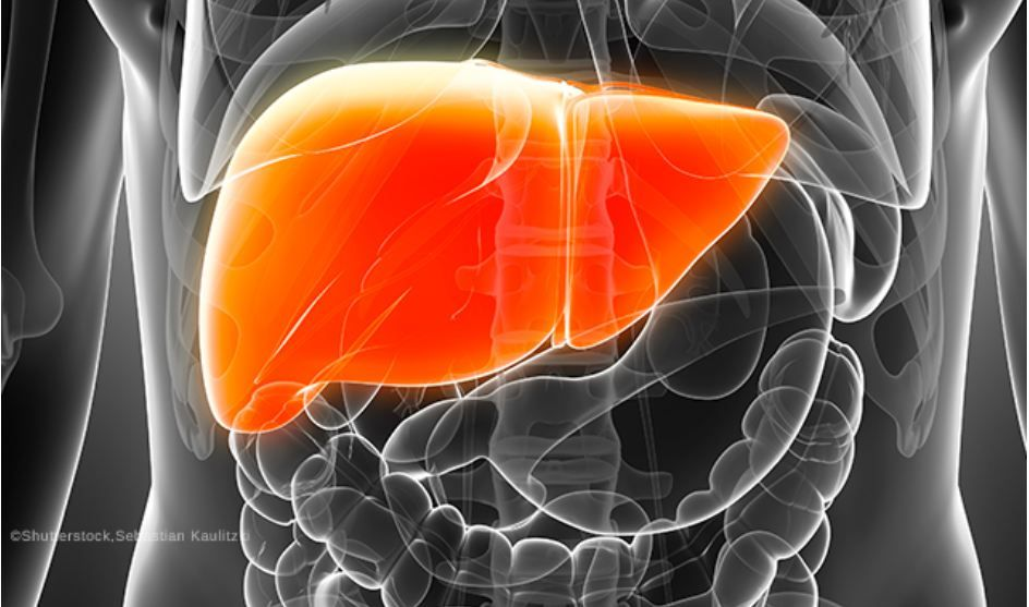 The Skinny On Reducing Liver Fat With Empagliflozin In Type 2 Diabetes Endocrinology Network