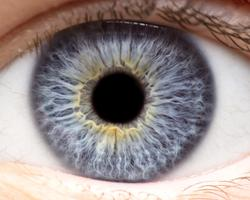 OpRegen Continues to Show Efficacy in Dry AMD Geographic Atrophy