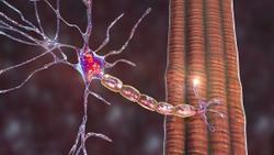 Astellas Pauses Gene Therapy Trial for X-Linked Myotubular Myopathy