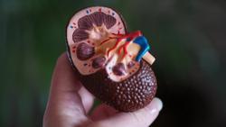 COVID-19 Vaccines Induce Serologic Responses in Kidney Transplant Recipients