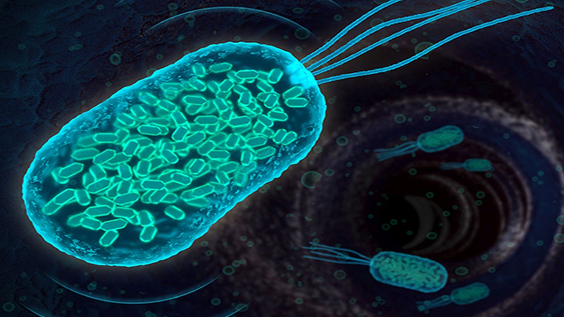 what is good bacteria called