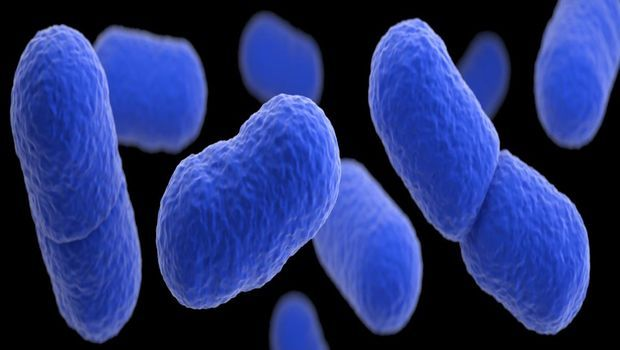 Listeria May be a Serious Miscarriage Threat in Early ...