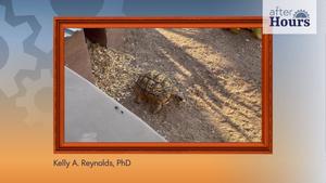 After Hours: Raising Tortoises