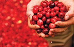Fruit d'Or introduces whole fruit cranberry ingredient for manufacturing gummy supplements