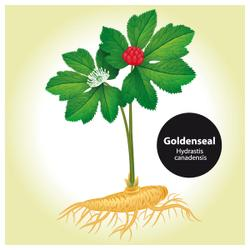 Biodiversity-friendly goldenseal