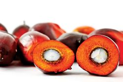 What Makes Palm Oil a Top Replacer for Partially Hydrogenated Oils?