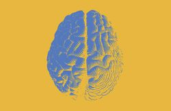 One brain, multiple concerns: The diversity of the cognitive health category