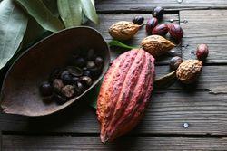 Nutritional Outlook's Best of 2014: DianaPlantSciences