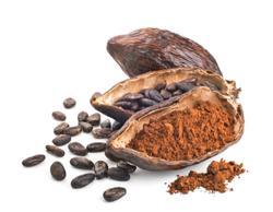 Cocoa production