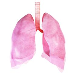 Respiratory health: Can nutritional ingredients breathe life into the respiratory category?