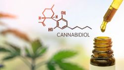 Indena authorized by Italian government to produce CBD