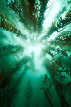 Australian research consortium to fast-track the country's marine bio-industries
