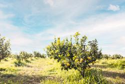 HP Ingredients purchases stake in bergamot extract manufacturer Herbal & Antioxidant Derivatives