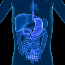 Deerland's spore-forming DE111 probiotic germinates human GI tract in first-of-its-kind study