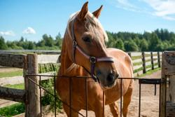 Purina chooses Ahiflower plant-based omega-3 oil for equine supplements