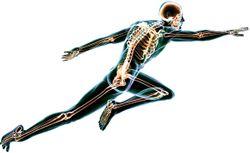 Bone-Health Cofactors: New Science on Vitamin D, K2, Magnesium, and Zinc