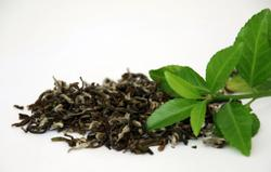Layn Natural Ingredients expands its portfolio of tea extracts