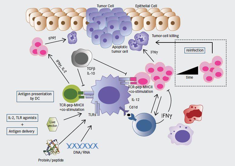 gastric cancer virus