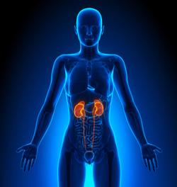Lenvatinib-Pembrolizumab Combo Induces 'Impressive' Results in Patients with Advanced Kidney Cancer