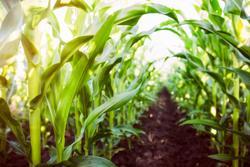 New Strategies Aim to Expand Preventative CRC Screenings in Rural America