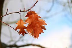 Fall Into Better Health and Financial Practices