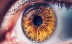 Evolution of optical coherence tomography of the human eye