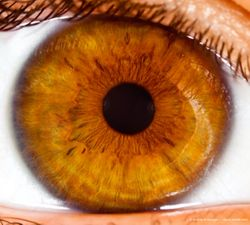 Probe of IRIS registry: Anti-VEGF injections key treatment for PDR