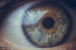 Are posterior corneal curvature changes culprit in hyperopic shifts?