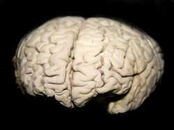 Impaired Blood Flow in Diabetic Brain Tied to Cognitive Problems