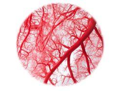 Top Content 2020: Preventive Cardiology