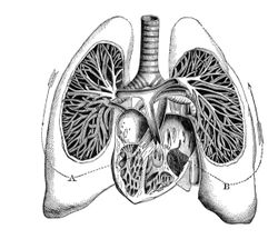 Patients with PAH-COPD May be at Higher Risk than those with Idiopathic PAH