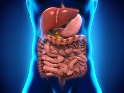 Study: Healthy Gut Microbiome Responsible for Mucus Layer in the Colon