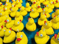 Compliance: Getting Those Ducks in a Row