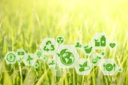 Taking Steps Toward a Sustainable Future