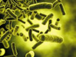 The Human Microbiome—Our Body's Secret Weapon
