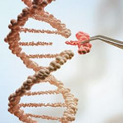 Gene-Editing Techniques Target New Applications