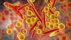 Using ddPCR to Detect Mycoplasma Contamination