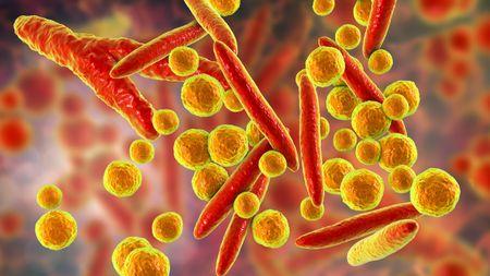 Detecting Mycoplasma Contamination; Image: KATERYNA_KON - STOCK.ADOBE.COM