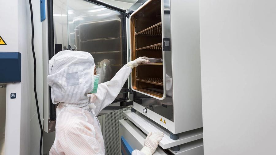 Designing Incubators for Cell Therapy Manufacturing; image: warut/Stock.Adobe.com