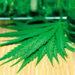 The Search for Efficient Synthesis of Complex Cannabinoids