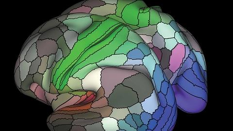 Brain Pathways: New Approaches to Structure-Function Localization