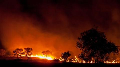 While Australia Burns: What Psychiatrists Can Learn From Each Other