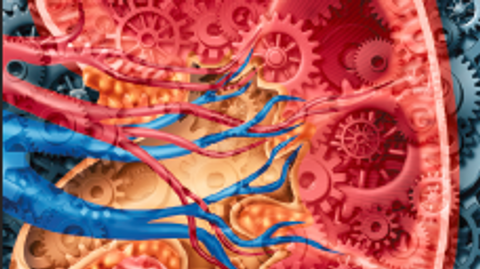 Clinical Considerations in Renal Failure, Depression, and Delirium