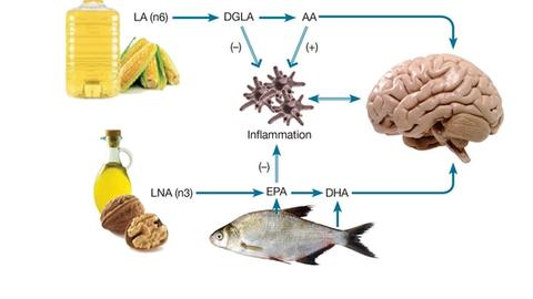 Fat, Food, and Mood: Beyond Omega-3s