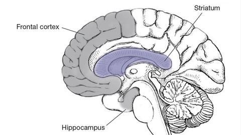 Neurobiology and Clinical Manifestations of Methamphetamine Neurotoxicity