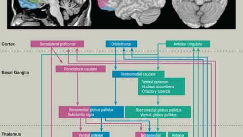 A Practical Update on Neuroimaging for Psychiatric Disorders