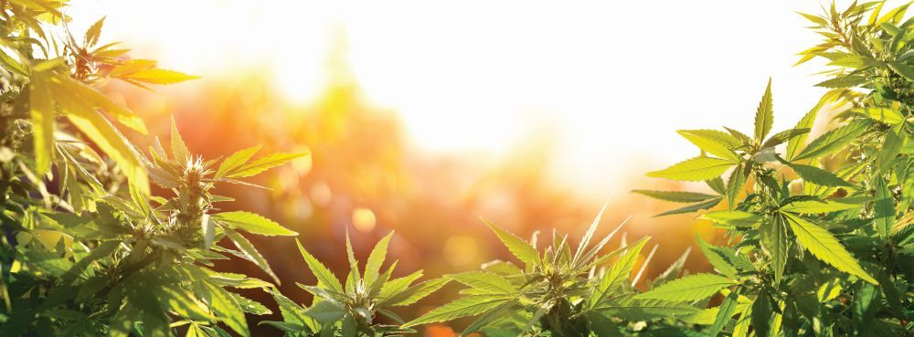 Medical Marijuana for Autism
