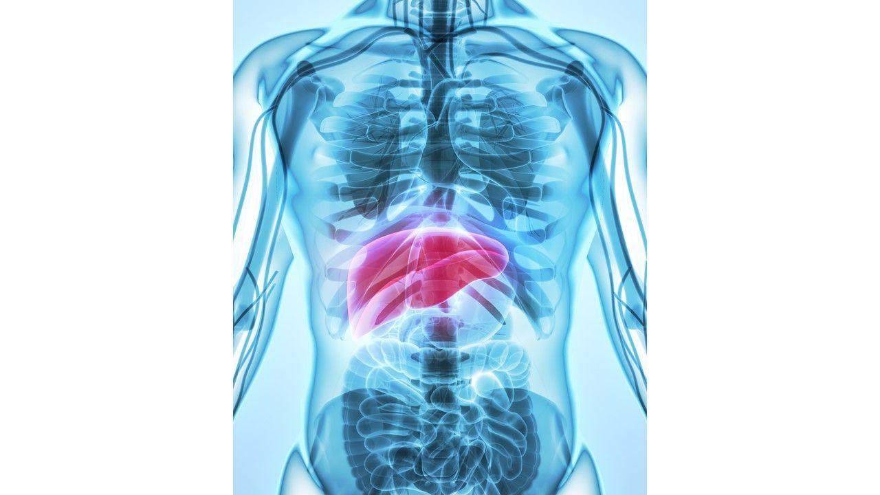 Liver (©Yodiyim, AdobeStock)