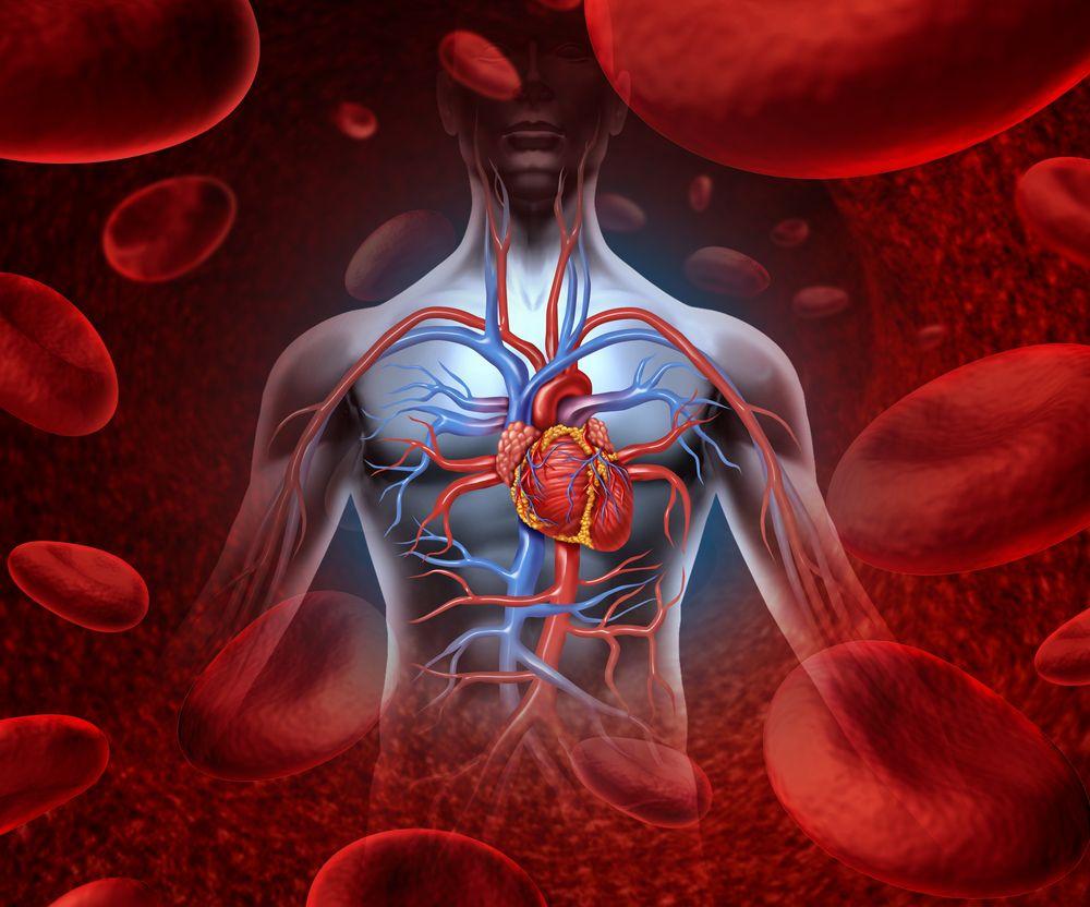 Cardiovascular disease (©Lightspring/Shutterstock.com)